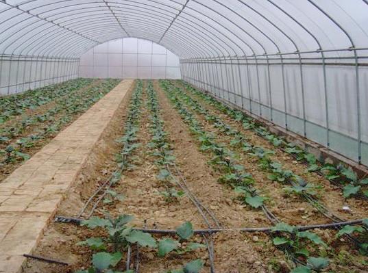 蔬菜大棚滴灌